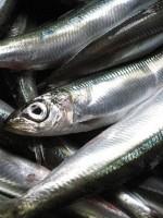 Specijaliteti od plave ribe